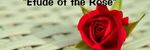 Ronald Karle - Etude of the Rose